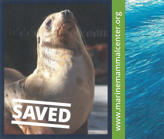 Percevero is our seal of the month